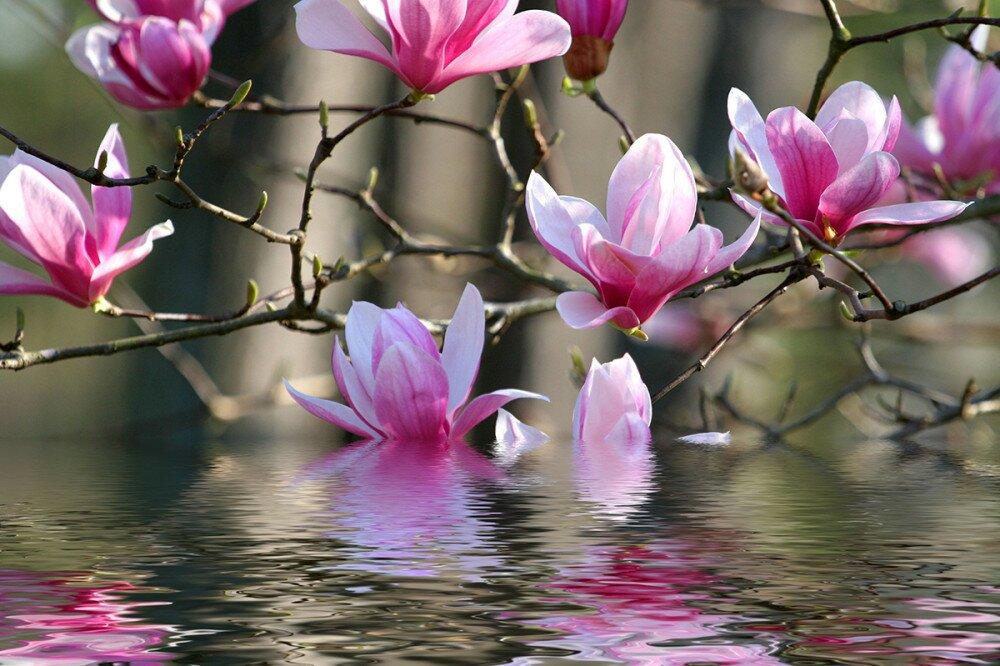 Tavaszi virágzás |Happy Family minden ami család