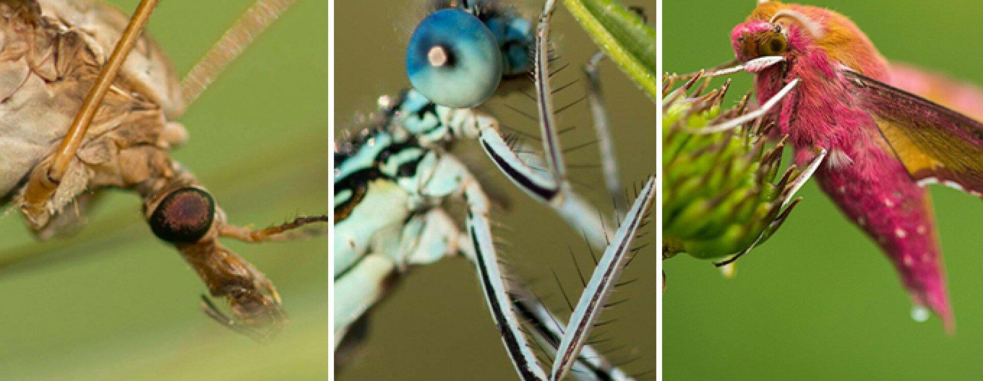 Vízben élő védett rovarok