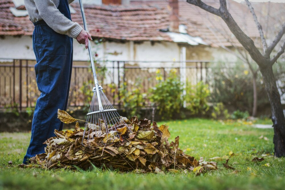 Man collecting fallen autumn leaves in the home yard