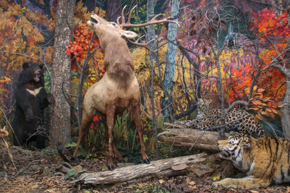 Taxidermy of tiger, leopard, deer and asian bear